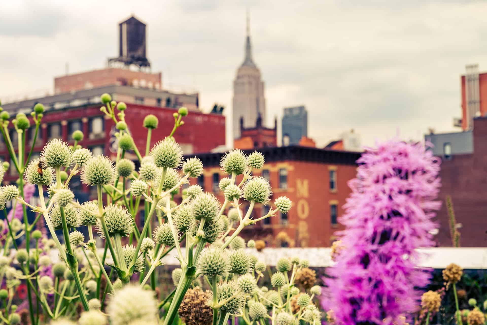 vue depuis la highline new york